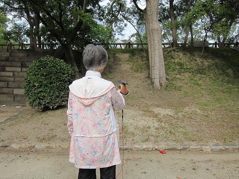 有位阿姨正在訓練鳥兒