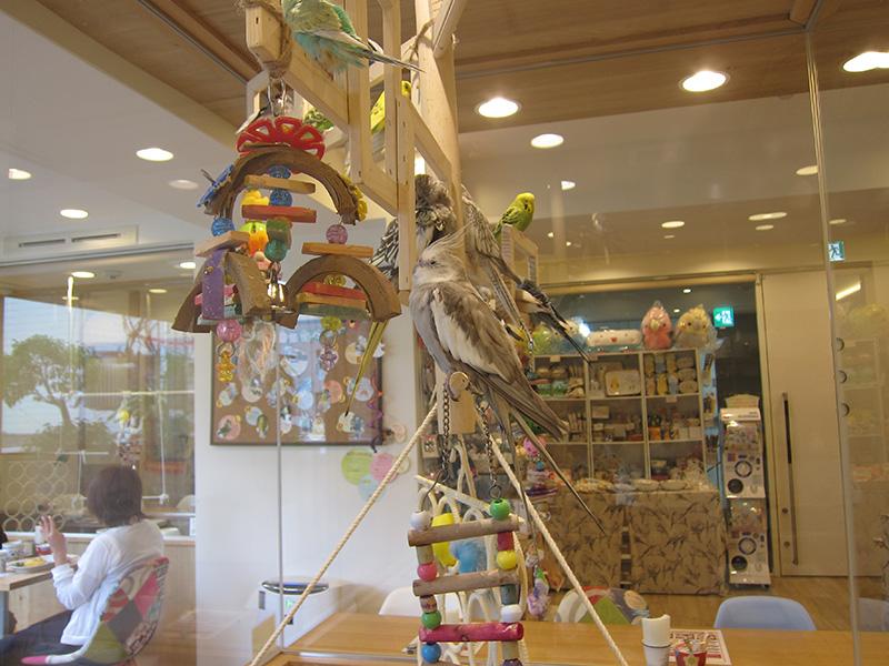 KOTORI CAFE-可愛的鳥兒與萬惡的商品牆